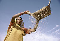 Indian-Agriculture-2.jpg